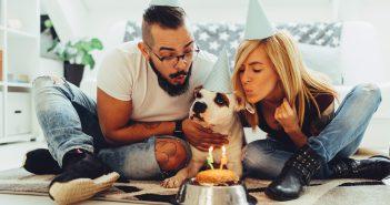 50 Sätze von Paaren mit Haustier